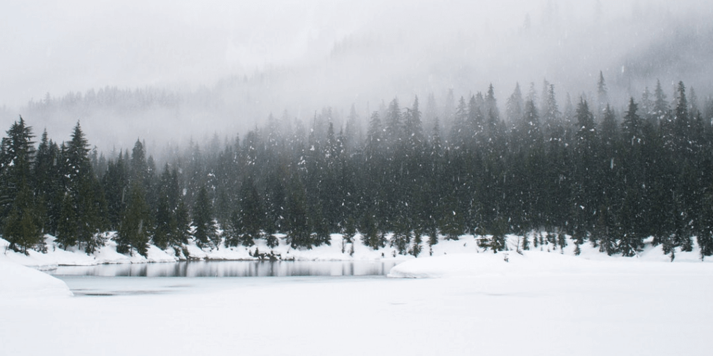 Trees along a snowy lake with fog